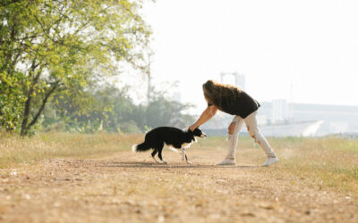 Mi perro no obedece, mi perro no me hace caso, mi perro…