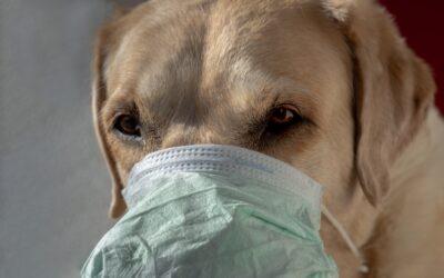 """La """"nueva normalidad"""" canina. ¿Cómo afecta el desconfinamiento a mi perro?"""