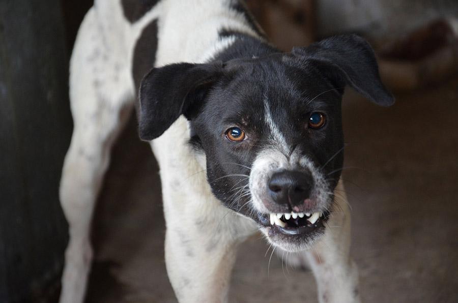 Modificación de Conducta Canina