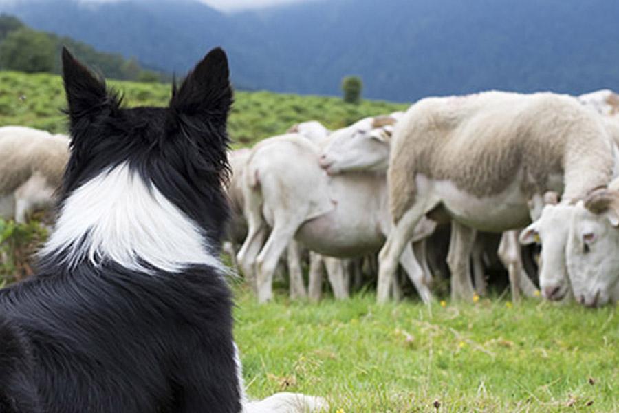 Cursos de pastoreo Bilbao